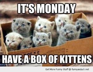 monday kittens